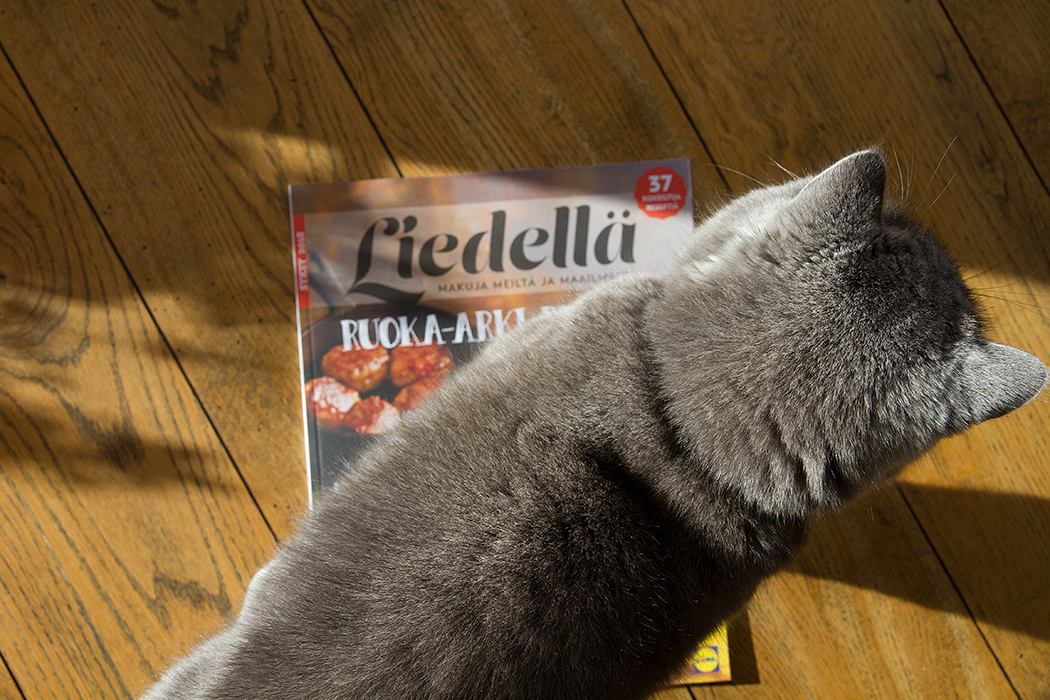 кошка и журнал
