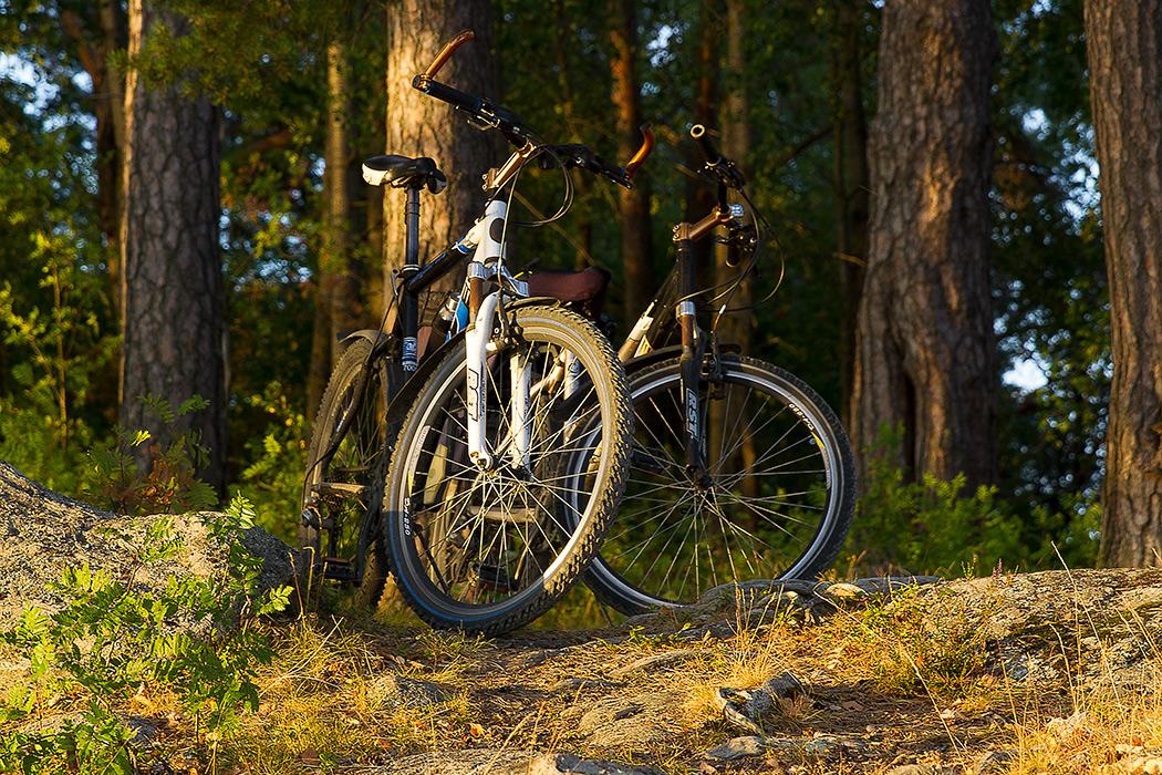 велосипеды в лесу